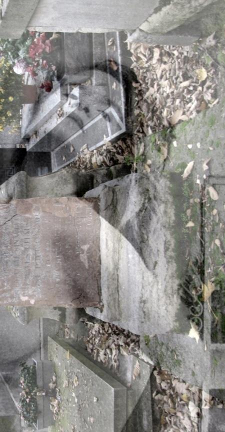 IMG_0610-cropgcva